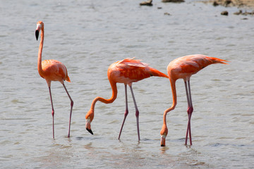 Garden Poster Flamingo Flamingo-Kolonie
