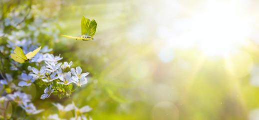 Wielkanocny wiosna kwiatu tło; świeży kwiat i żółty motyl na zielonym tle