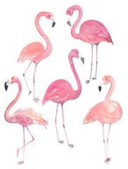 Set watercolor random flamingos