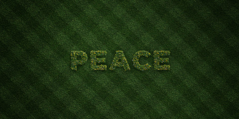 PEACE - fresh Grass letters with flowers and dandelions - 3D rendered royalty free stock image. Can be used for online banner ads and direct mailers..