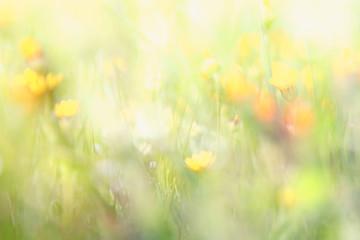 Deurstickers Landschappen abstract dreamy photo of spring wildflowers