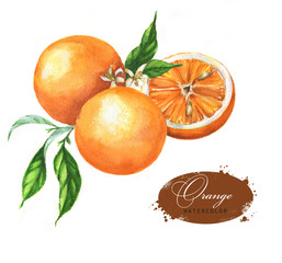 Hand drawn watercolor illustration of oranges: leaves, blossom and slice on the white background