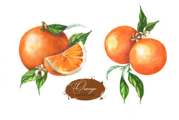 Hand drawn watercolor illustration set of oranges: leaves, blossom and slice on the white background