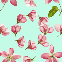 Apple. Seamless pattern texture of flowers. Floral background, photo collage