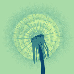 Dandelion with buds vector background vintage