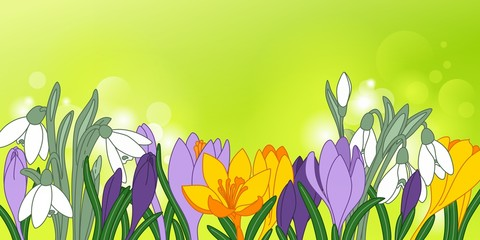 Colorful springflowers, hand-drawn snowdrops and crocuses, floral background or banner