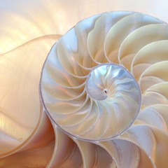Photo sur Aluminium Spirale nautilus shell section background symmetry Fibonacci half cross section spiral golden ratio number sequence stock photo, stock photograph, image, picture, editorial structure growth copy space
