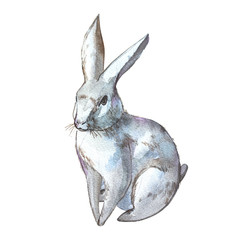 Rabbit. Isolated on white background. Watercolor hand drawn illustration. Easter design.