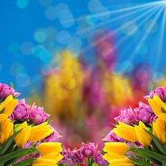 Kwiaty a najlepiej tulipany to tło  na każdą okazje.
