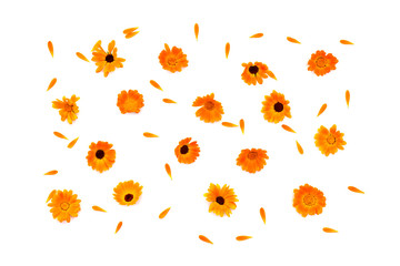 Flowers and petal Calendula (Calendula officinalis, pot marigold, ruddles, garden marigold, English marigold) on a yellow background with space for text. Top view, flat lay. Medicinal herb.