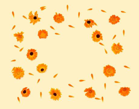 Flowers and petal Calendula (Calendula officinalis, pot marigold, ruddles, garden marigold, English marigold) on a yellow background with space for text. Top view, flat lay. Medicinal herb.