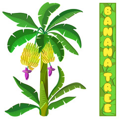 Banana tree. Isolated on white background. 3d isometric view. Vector illustration.