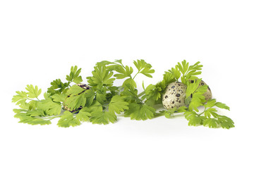 Easter quail eggs with grass  isolated on white