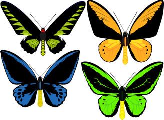 set of Indonesian vector birdwings butterflies