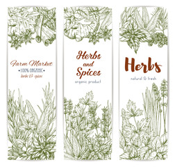 Herbs and spices sketch vector banners