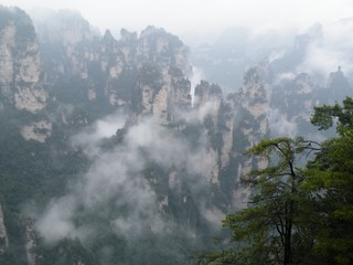 Deurstickers Bergen Foggy forest. Landscape, mist and mountain.