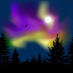 Silhouette of coniferous trees on the background of colorful sky.  Flying eagle. Night. Moonlight.  Violet  and yellow northern lights.