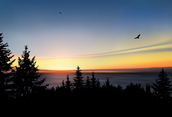 Silhouette of  coniferous forest, sea horizon and colorful sky.