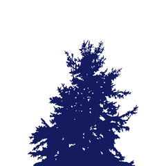 Silhouette of pine tree. View from below. Blue tone.