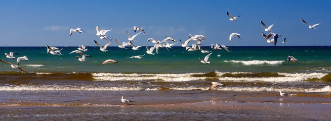 Flock of seagulls flying at seashore over sandy beach. Scenic seaside summer landscape with clear blue sky and sea surf
