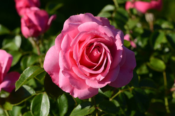 Blumen 764