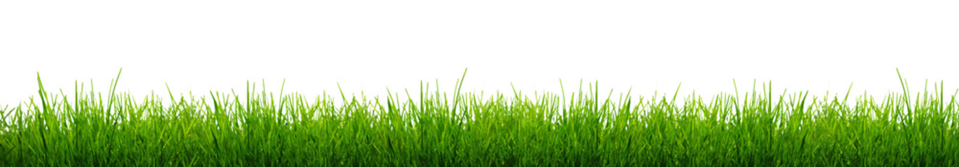 Blades of Green Grass Isolated on a white background.