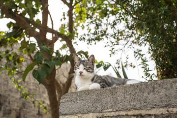 Cat on the street, Rhodes, Greece.