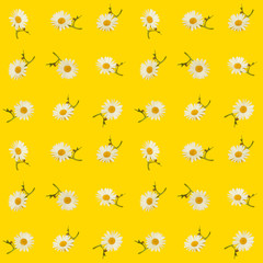 Cute Seamless Photographic Flower Pattern, Daisies on Yellow Background