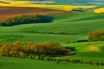 Yellow rapeseed field with wavy abstract landscape pattern. Moravian rolling landscape on sunset in yellow colors. Moravia, Czech Republic.
