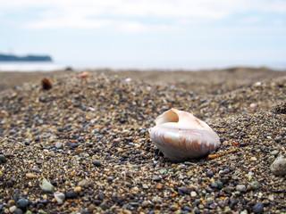 砂浜に貝殻