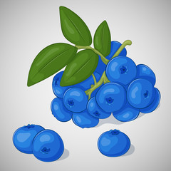 Bright juicy blueberry on grey background. Sweet delicious for your design in cartoon style. Vector illustration. Berries Collection.