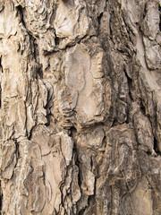 The bark of a tree /Pine tree bark image