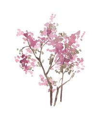 Watercolor pink tree isolated on white. Blossom bush. Spring. Cherry tree. Sakura.