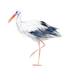 Stork. Picture of a wild bird. Watercolor hand drawn illustration.