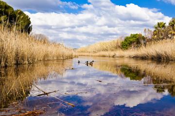 ducks swimming in a lagoon