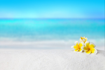 Foto op Canvas Frangipani pagoda, plumeria on sandy beach, Summer concept