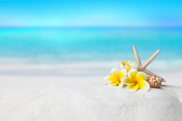 La pose en embrasure Frangipanni pagoda, plumeria,Shells on sandy beach, Summer concept