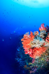 SCUBA divers in silhouette next to colorful pink and orange soft corals on a deep tropical reef
