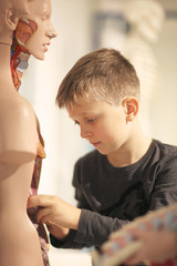 A boy in a museum near the medical mannequin holding caused interest exhibit