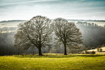Leafless trees on a green field