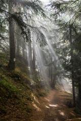 sunbeam has Travert trees