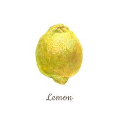 Botanical watercolor illustration of yellow lemon on white background