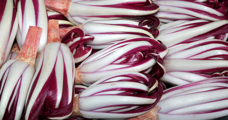 red chicory called Radicchio Rosso di Treviso in Italy for sale