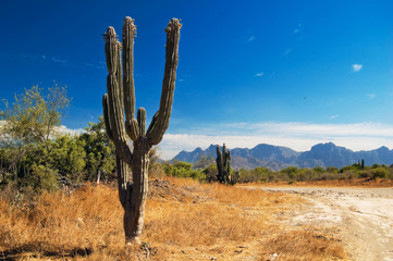Cactus in the desert of Baja California