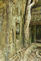 Overgrown tree roots near Cambodian sculpture at Preah Khan