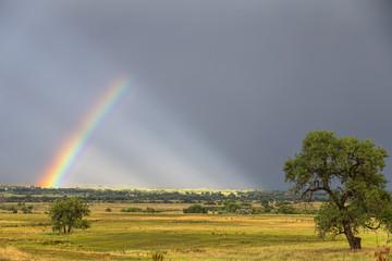 Wall Mural - Beautiful Contryside Rainbow