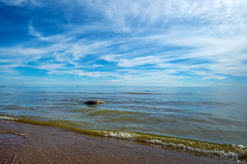 Beautiful Baltic coastline and seascape