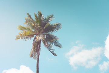 vintage nature background - Palm tree on blue sky in summer. vintage color tone