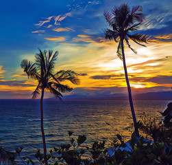 Palm trees during sunset. Vivid seaside sunset with palm tree silhouettes.