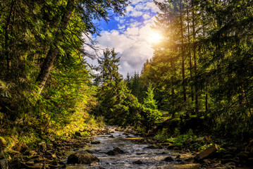Wonderful autumn landscape. colorful leaves on the trees glowing in sunlight over the mountain river at sunny day in the forest